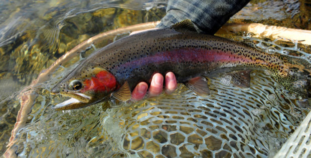 Best Trout Lures for Rivers and Streams
