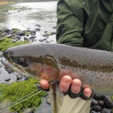 Best Steelhead Lures